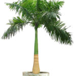 Contemporary palm